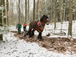 Dirk Potthoff und Kollege mit Holz-Rückepferd