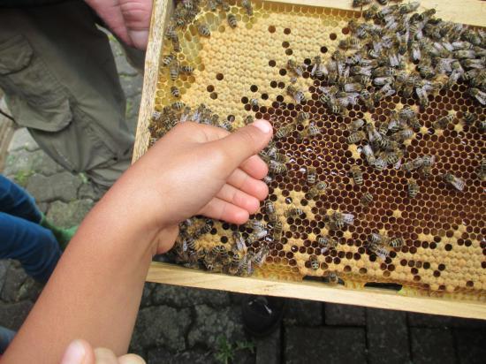 Keine Angst Vor Bienen Kindergarten Krombach Besucht Imkerverein
